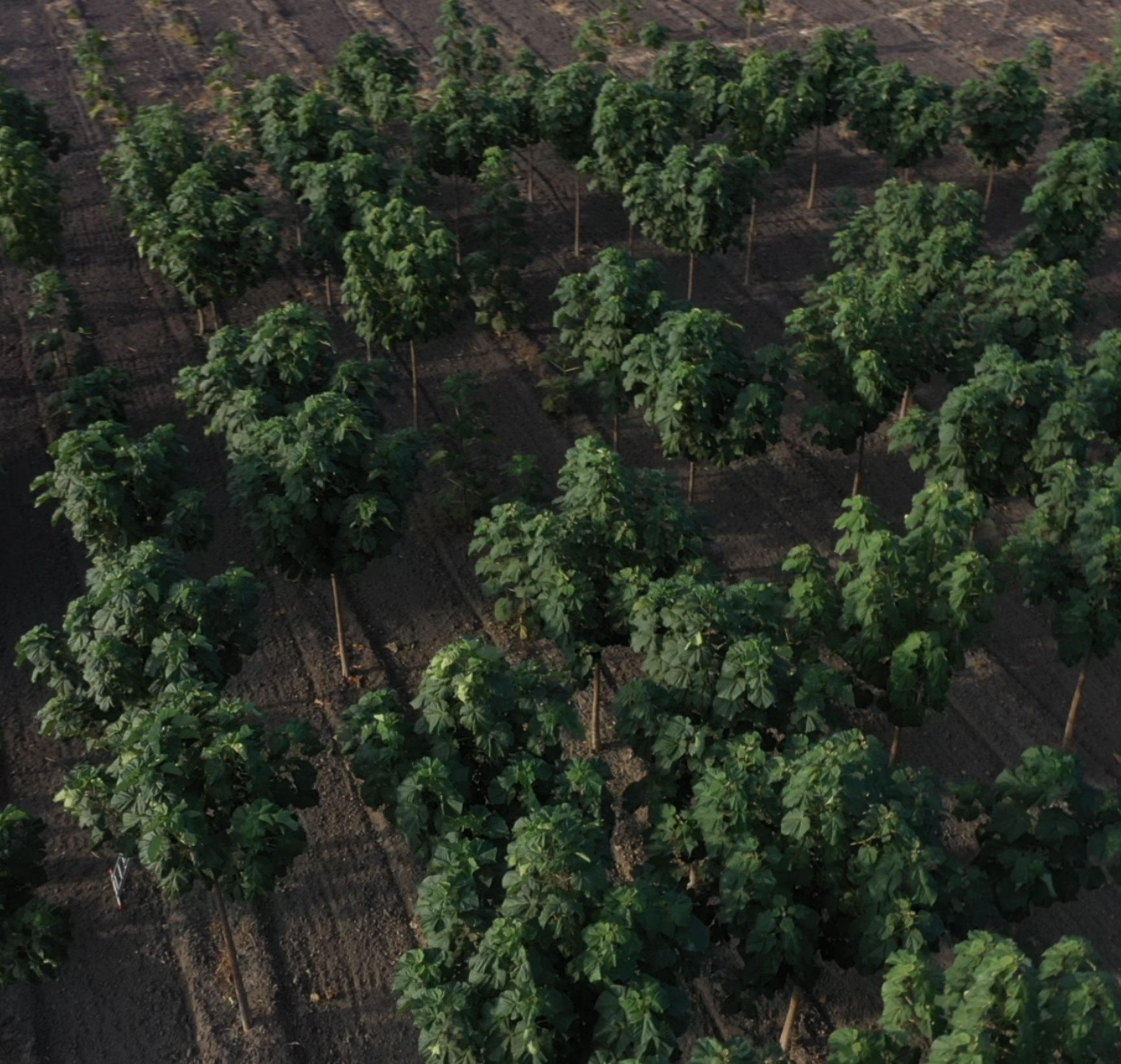 La foresta FEYDOM